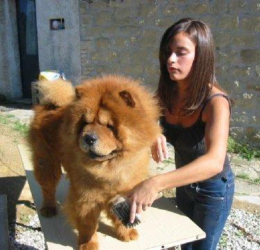 anabolicos para perros en humanos
