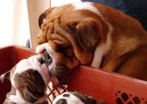 mamá y cachorro