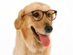 Inteligencia Canina