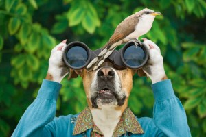 los sentidos del perro