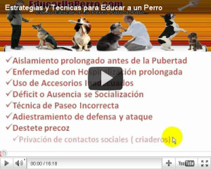 Educacion Canina