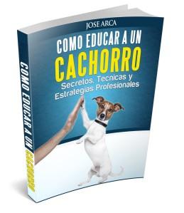 Como Educar a un Cachorro fiverr