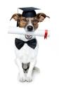 Como Educar a un Perro