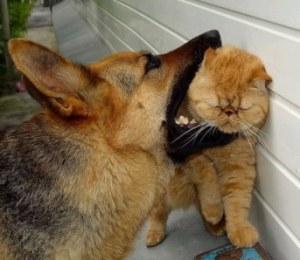como-perros-y-gatoss